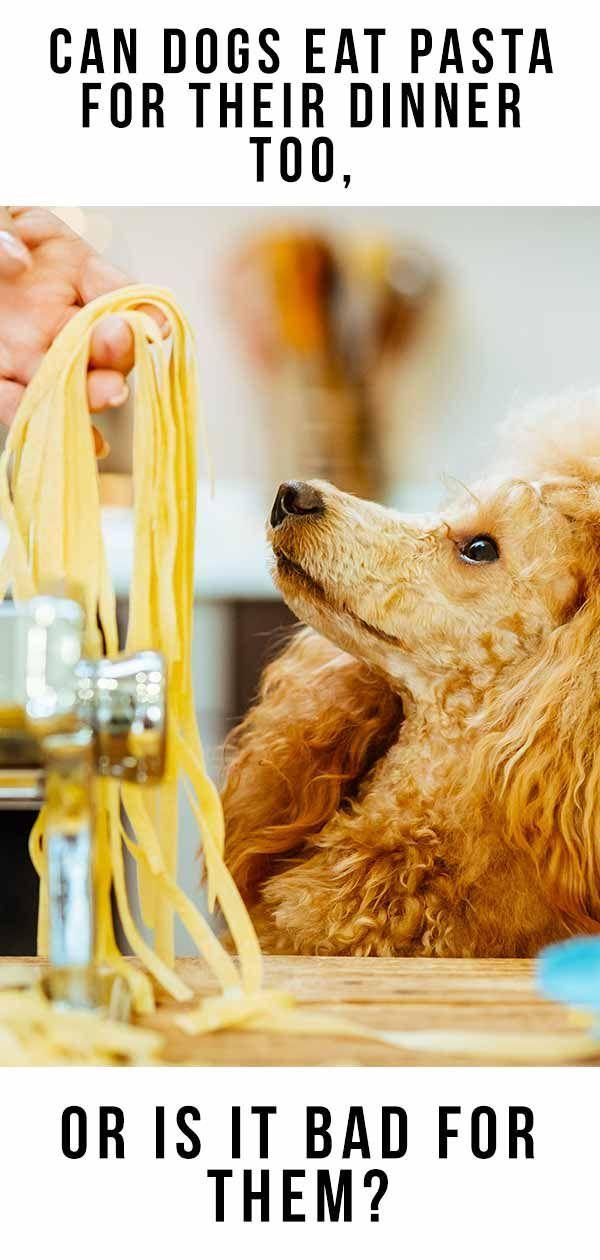 Can Dogs Eat Pasta - Macarrão é bom para cães comerem?