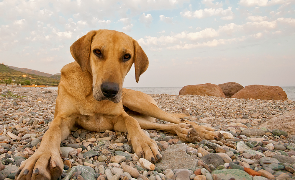 The Demise of Dominance Theory In Dog Training
